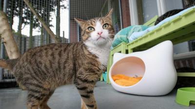 Petitie voor verbod op verkoop dieren in winkels en online