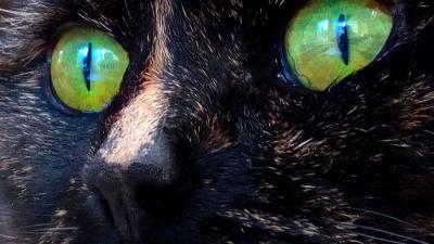 kat-ogen-groen