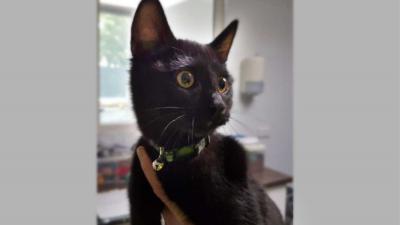 kat-zwart