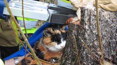 Kat bekneld in boom