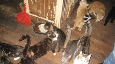 Foto van veel katten in de woning | LID