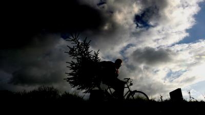 Vijf kerstboomdieven aangehouden