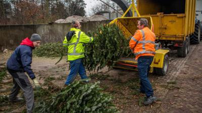 kerstboom-vernipperaar