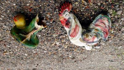 'Uitgelegde kip waardeloos behandeld'