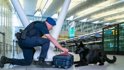 Hond ruikt aan koffer