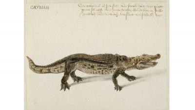 Spectaculaire ontdekking onopgemerkte tekeningen Frans Post