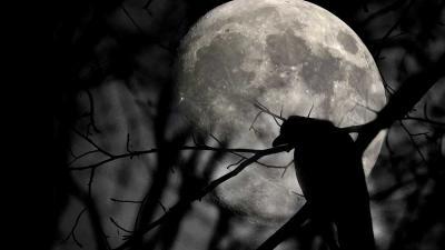 foto van maan kraters vogel boom | Archief EHF