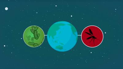LUMC gaat malariavaccin op gezonde mensen testen