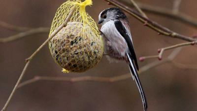 Graspieper meest geteld op landelijke Vogelteldag