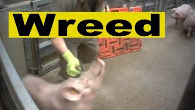 Over dierenmishandeling in een slachthuis gesproken