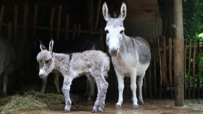 moeder polly en jong een paar uur na de bevalling