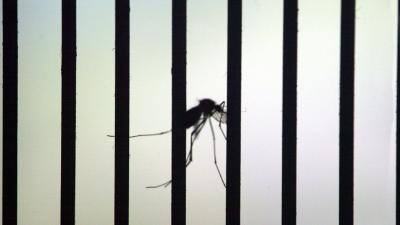 Noodstoestand afgekondigd om Zika virus