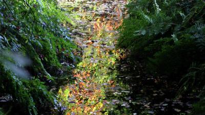 Dertien natuurgebieden strijden om titel 'Mooiste Natuurgebied van Nederland'