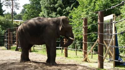 Dierenpark houdt olifant spiegel voor