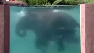 Japanse dierentuin bouwt speciaal zwembad voor olifanten