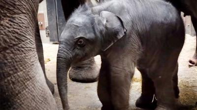 olifantje-artis
