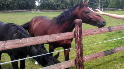 Verminkingen bij twee paarden aangebracht in Utrechtse Overberg