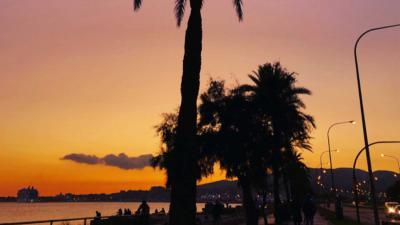 palmbomen-strand-Mallorca