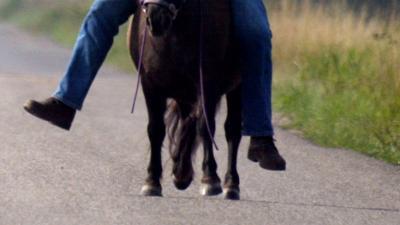 Man misbruikt pony op klaarlichte dag bij koninklijke buitenverblijf paleis Huis ten Bosch