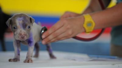 Puppy bij dierenarts