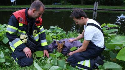 Omstanders redden ree uit water
