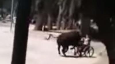 Dolle stier neemt kind in rolstoel op de hoorns