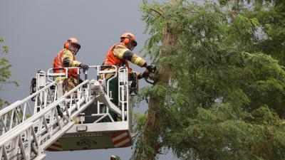 Brandweer zaagt boom om