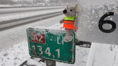 Spitsmuis langs snelweg