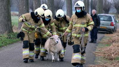 schaap-brandweermannen-touw