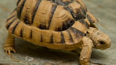 Foto van schildpad | Dierenpark Amersfoort