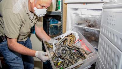 Foto van dode slangen in vriezer | Flashphoto | www.flashphoto.nl