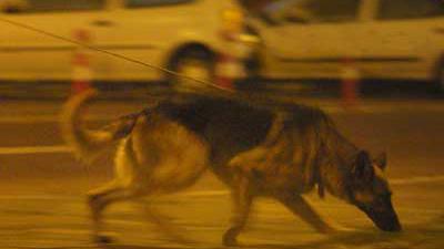 Politie onderzoekt met 'brandhond' voormalig zwembad Culemborg