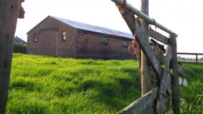 Inspecteurs treffen 50 dode runderen aan bij veehouder in Gelderland
