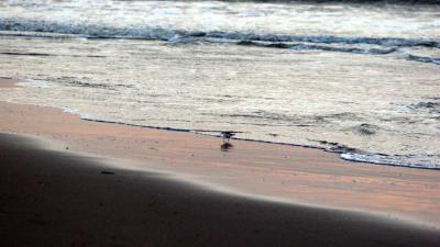 strand-zee-meeuw