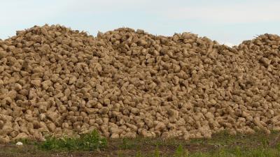 Foto van berg suikerbieten