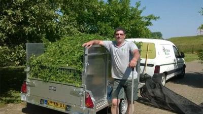 Inzamelen snoeisel Taxus Taxi verlaat vanwege laag promillage taxol