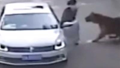 Tijger in safaripark Peking grijpt vrouw en doodt haar