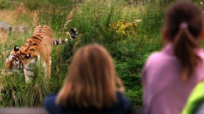 WNF:mens verantwoordelijk voor drastische afname wilde dieren