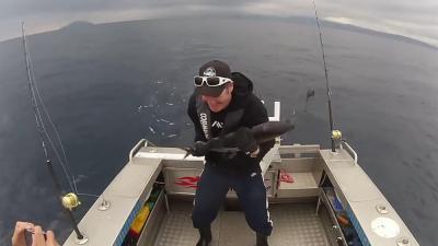 Visser krijgt de 'bibbers' van gevangen tonijn