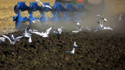 LTO pleit voor ministerie van Voedsel, Natuur en Platteland