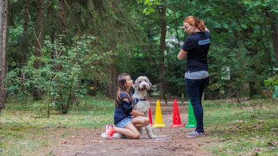 Gastgezinnen gezocht voor Therapie-hulphonden