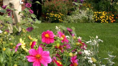 tuin-gras-bloemen