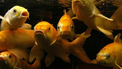 Foto van vissen in aquarium | Archief EHF