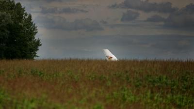 Foto van staart van vliegtuig in maisveld | Archief EHF