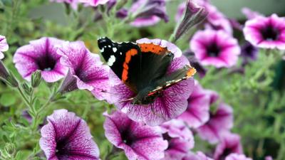 Voorzichtig herstel vlinderstand