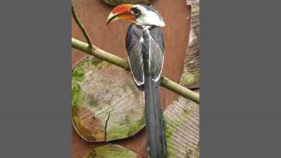 In Avifauna gestolen zeldzame vogel strijkt neer in tuin bewoner Den Bosch