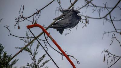 In boom vastgeraakte vogel door brandweer bevrijd