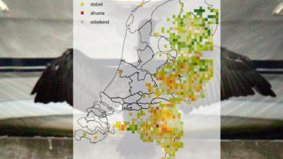 Sovon: Verspreiding vogelsoorten binnen Nederland is flink veranderd
