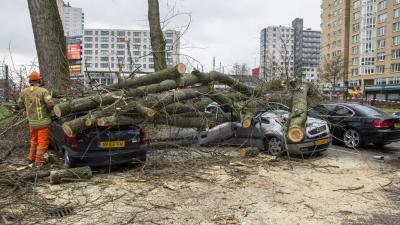 Boom valt door harde wind op geparkeerde auto's
