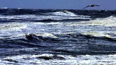 Foto van zee Noordzee meeuw | Archief EHF